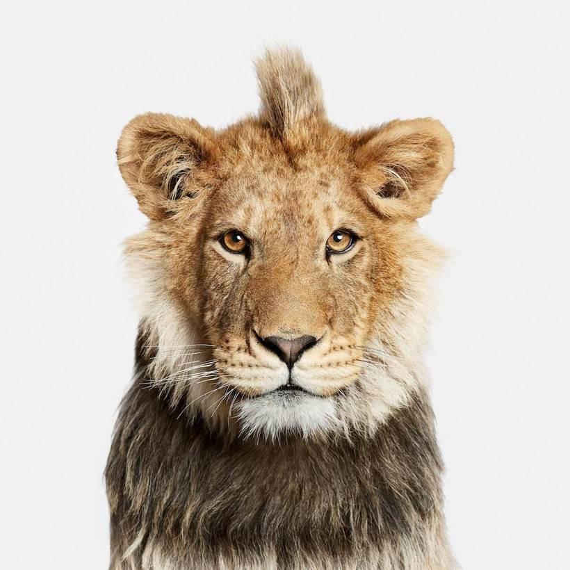 Фотограф делает уникальные портреты животных, разоблачающие их сущность
