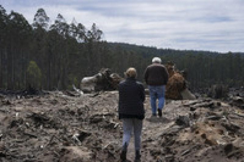 В Австралии малыш поссум выиграл суд у лесозаготовительной компании