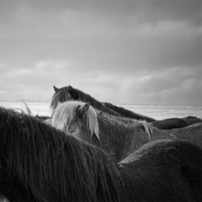 Победители конкурса IPhone Photography Awards 2020