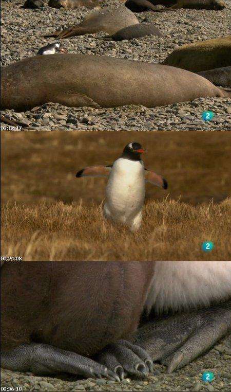 La ciudad de los pingüinos: Georgia del Sur (2017)