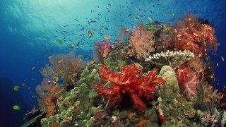 El planeta bajo el agua: Arrecifes (2017)