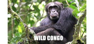 Wild Congo (2017) [HD 1080p]