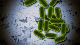 Virus y bacterias, el desafío [2015][2/2][LNT][WEBDL]
