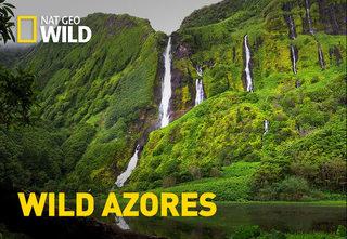 NatGeo: Wild Azores (2016) [HD1080p]