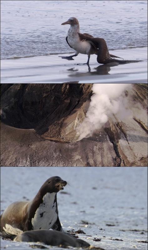 Galápagos [3/3] [2007] [BBC] [BDRip 1080p] [Dual Esp/Ing]