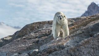 El verano del oso polar [2015] [WEBDL]