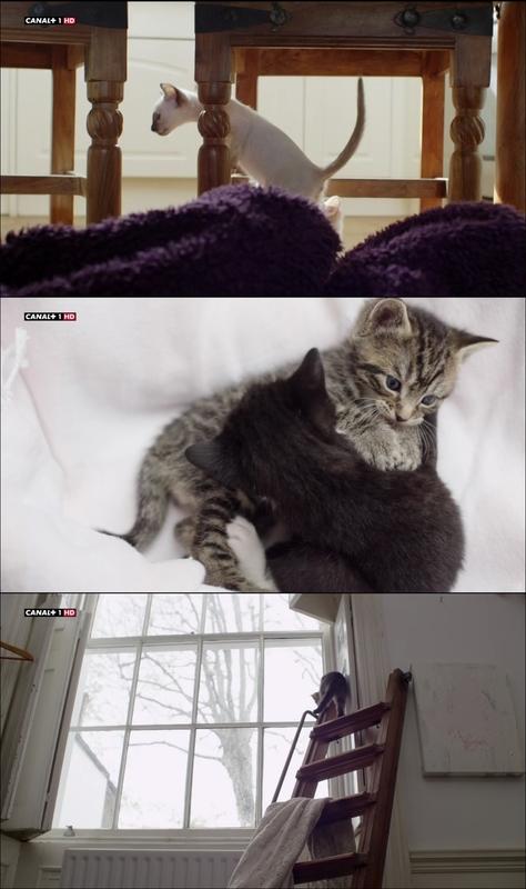 La Vida Secreta De Los Gatos [2014] [HDTV 720p]