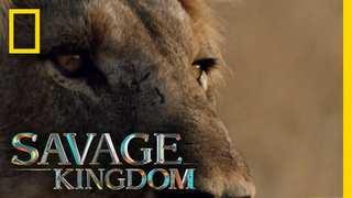 NatGeo Wild: Savage Kingdom (6/6) [HD1080p]