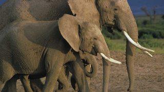 Grandes Parques Naturales de África: Parque Nacional de los Elefantes de Addo (2017)