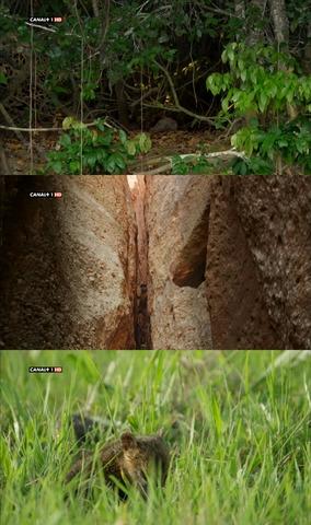 Brasil salvaje [3/3][2014] [NatGeo] [HDTV 720p] [Castellano]