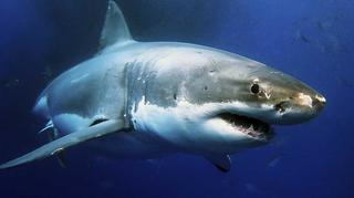 Tiburones. Los cinco grandes [2014] [WEBDL]