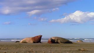 Campo de batalla: Patagonia [1997] [NatGeo] [HDTV 720p]