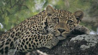 Cuentos de Zambia: Naturaleza Interconectada (2017)