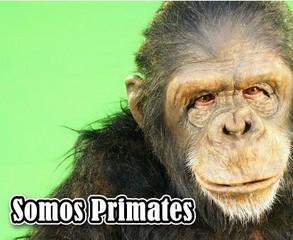 Somos Primates (2013)[3/3] [NatGeo] [SATRip]