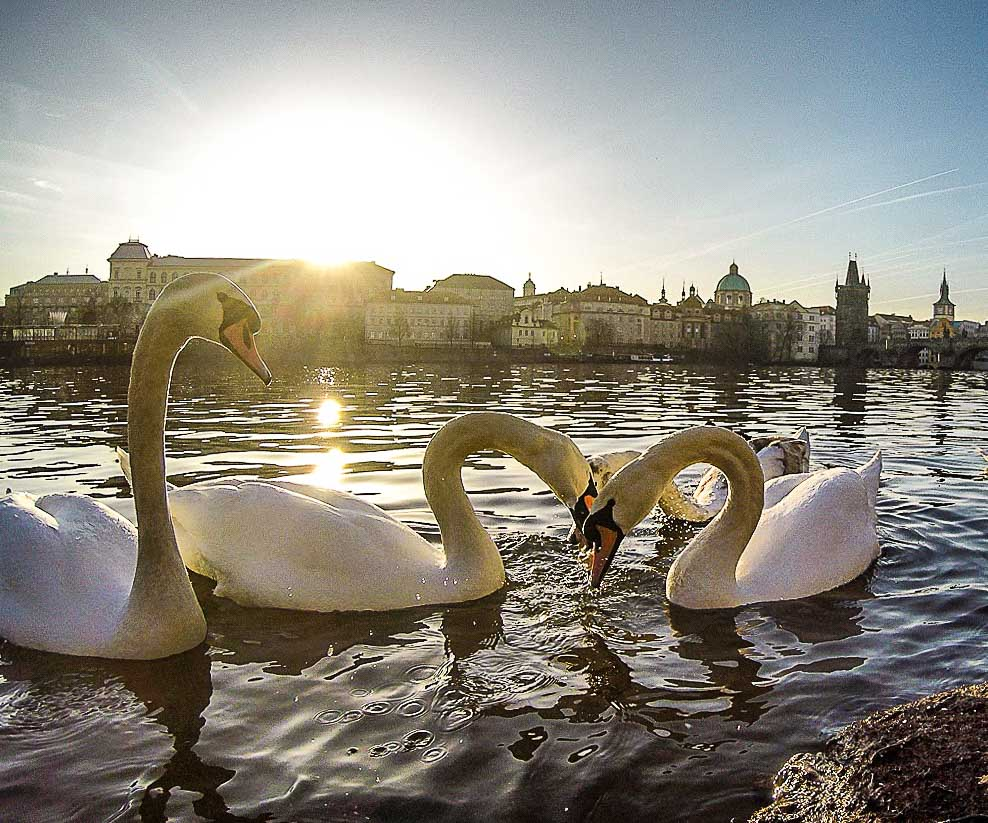 Cool Things to do in Prague