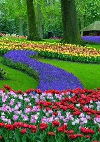 Hình ảnh những cánh đồng hoa Tulip đẹp lung linh sắc màu