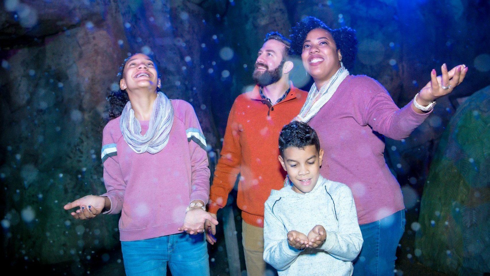 Zoo Lights Houston Prices