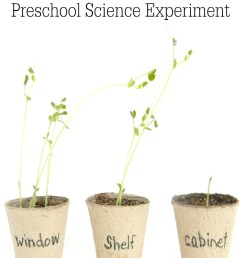 Science for Kids: Growing Plants Experiment - Pre-K Pages [ 1200 x 800 Pixel ]