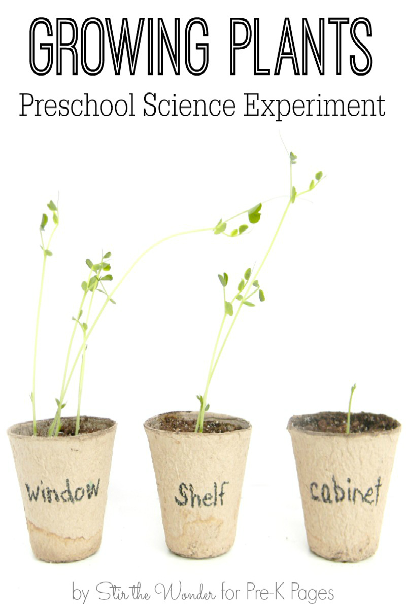hight resolution of Science for Kids: Growing Plants Experiment - Pre-K Pages