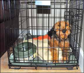 Puppy in crate during Christmas.