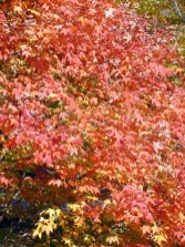 09-red-tree