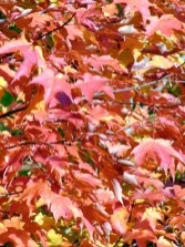 10-red-leaves