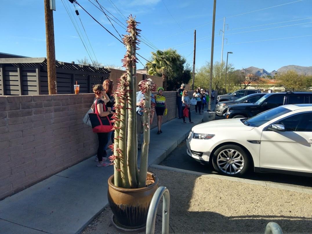 3.23 TJ cactus