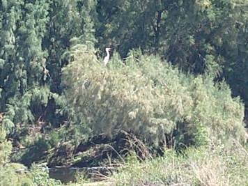 3.23 egret