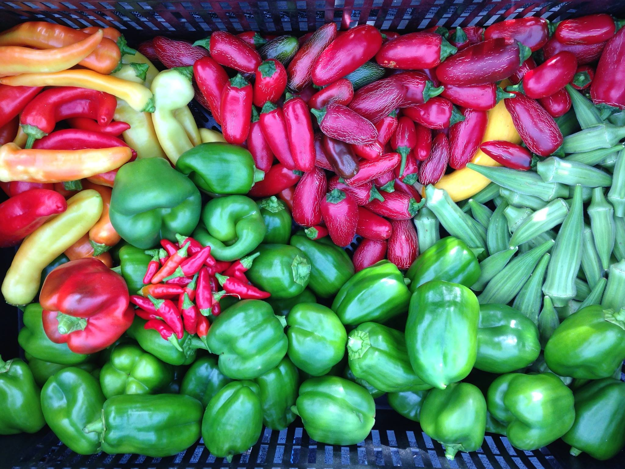 Peppers grown at the Strength to Love 2 farm