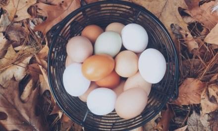 買蛋要挑棕殼還白殼?