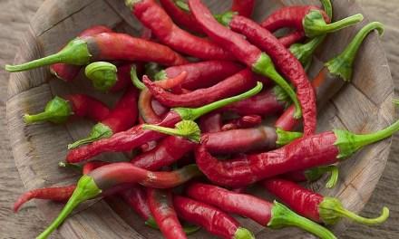 關於辣椒的5個小秘密,你不可不知!