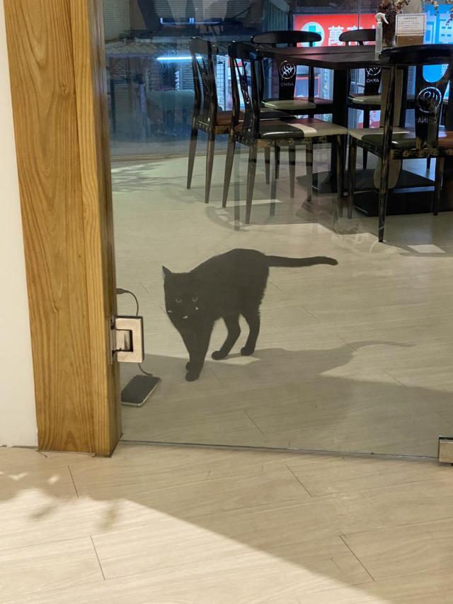 店內小黑貓