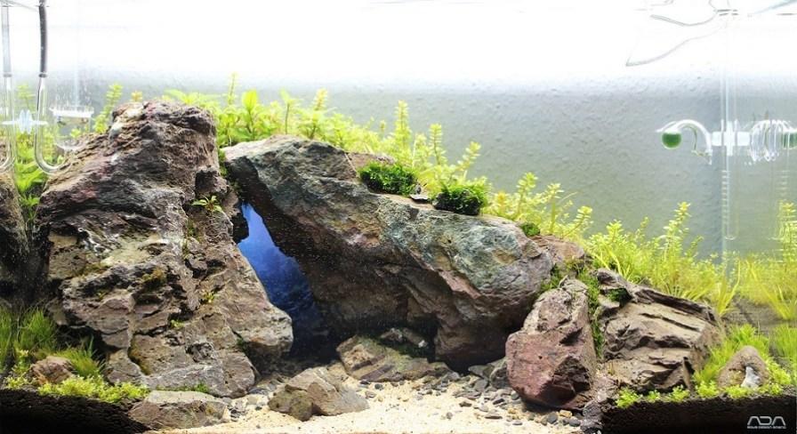 hiệu ứng ánh sáng trong hồ thủy sinh