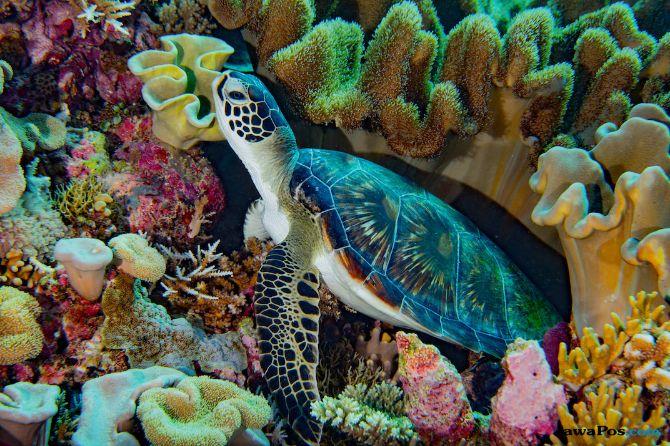 bahamas coral makes coral