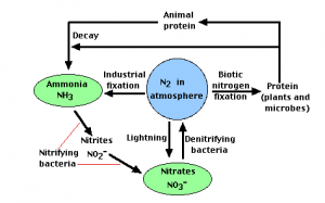Nitrogen Cycle  Introduction, Stages and its Process