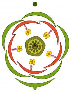 Solanaceae, Fabaceae, Liliaceae: Family Description  Biology