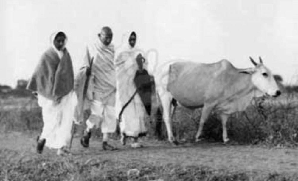 Gandhi_cow