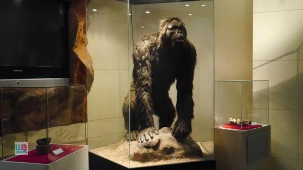 fossil_museum_korat18
