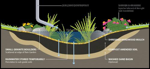 small resolution of rain garden cross section