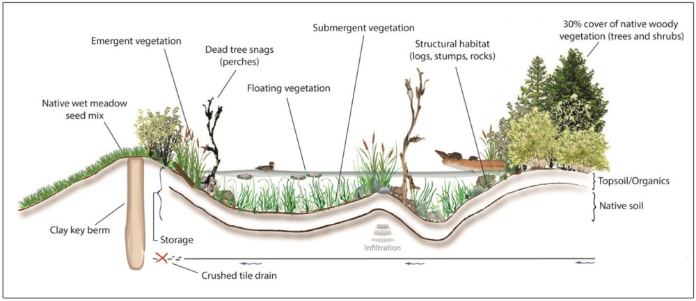 medium resolution of wetlands toronto and region conservation authority trca cross sectional diagram of wetland