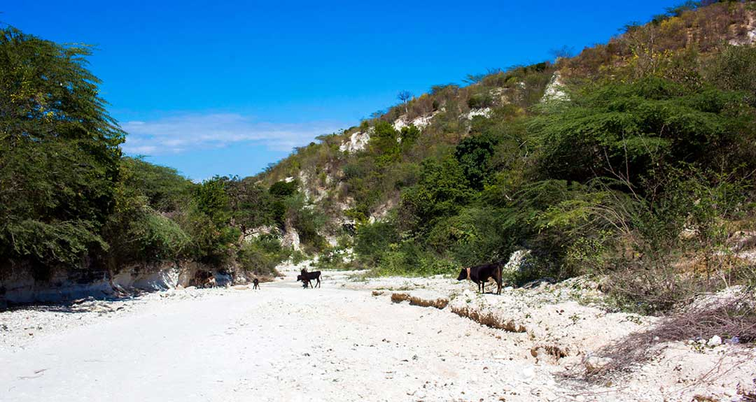 THIRST: Searching for Clean Drinking Water on a Desert Island