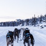 Explore The Stunning Canada Wilderness On This 5 Day Yukon Tour