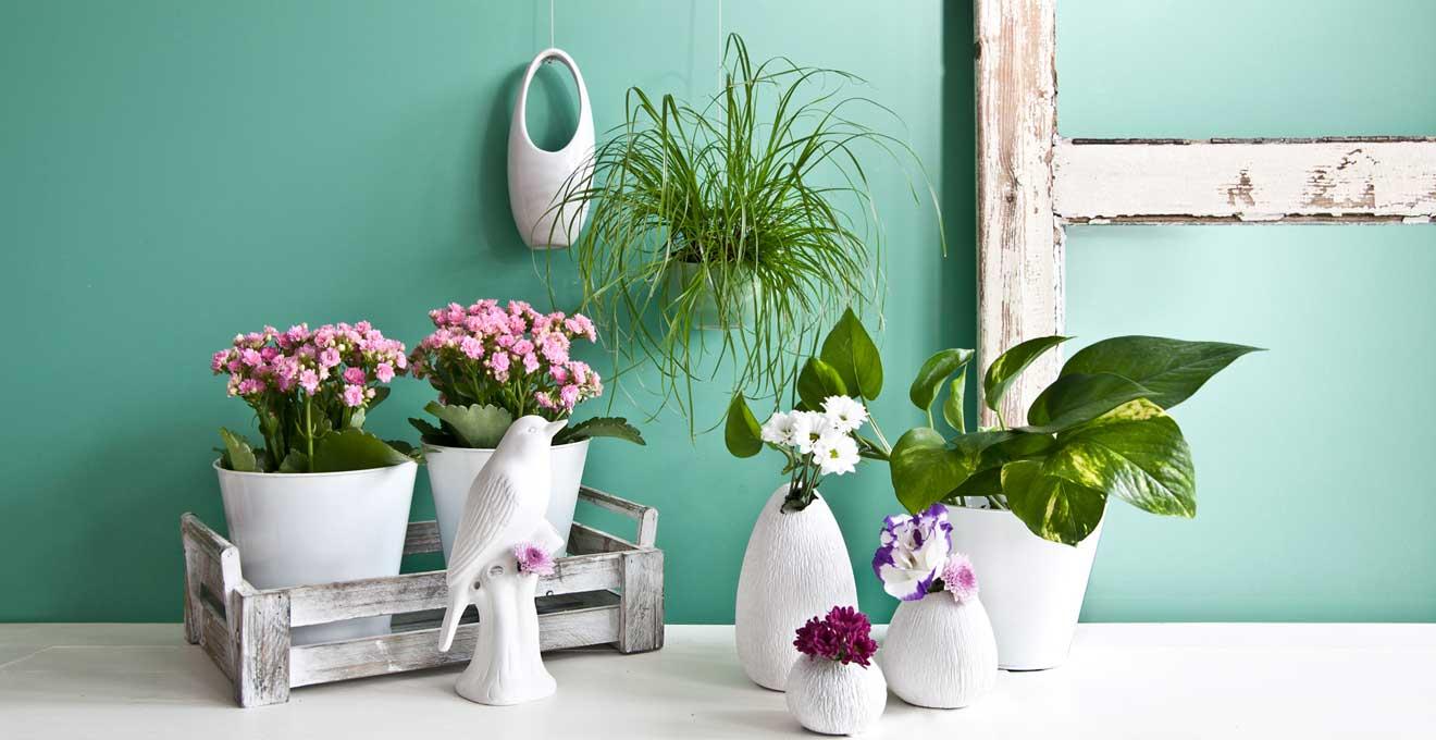 Groe Zimmerpflanzen Bis zu 70 Rabatt  WESTWING