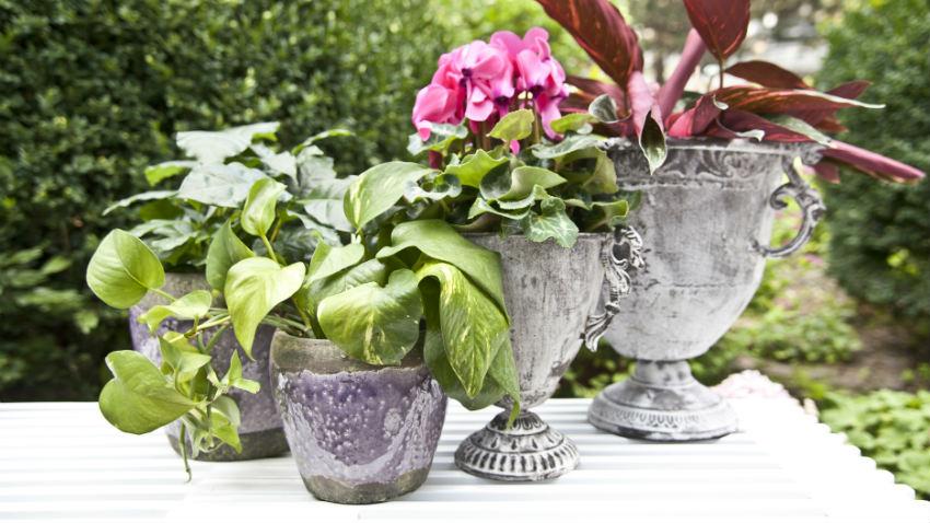 Vaso decora da solo o con i fiori  DALANI