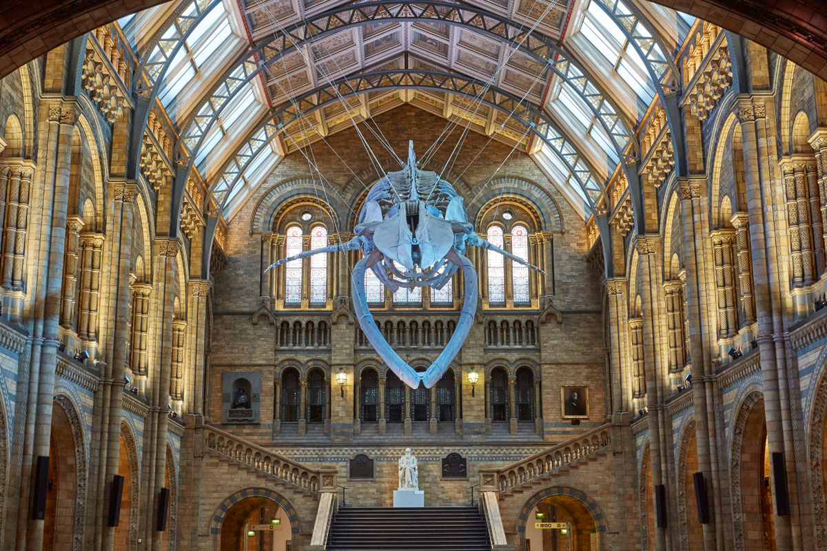 Blue whale at heart of Natural History Museum redesign  Creative Review