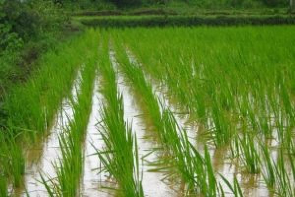 A rice paddy full of water.