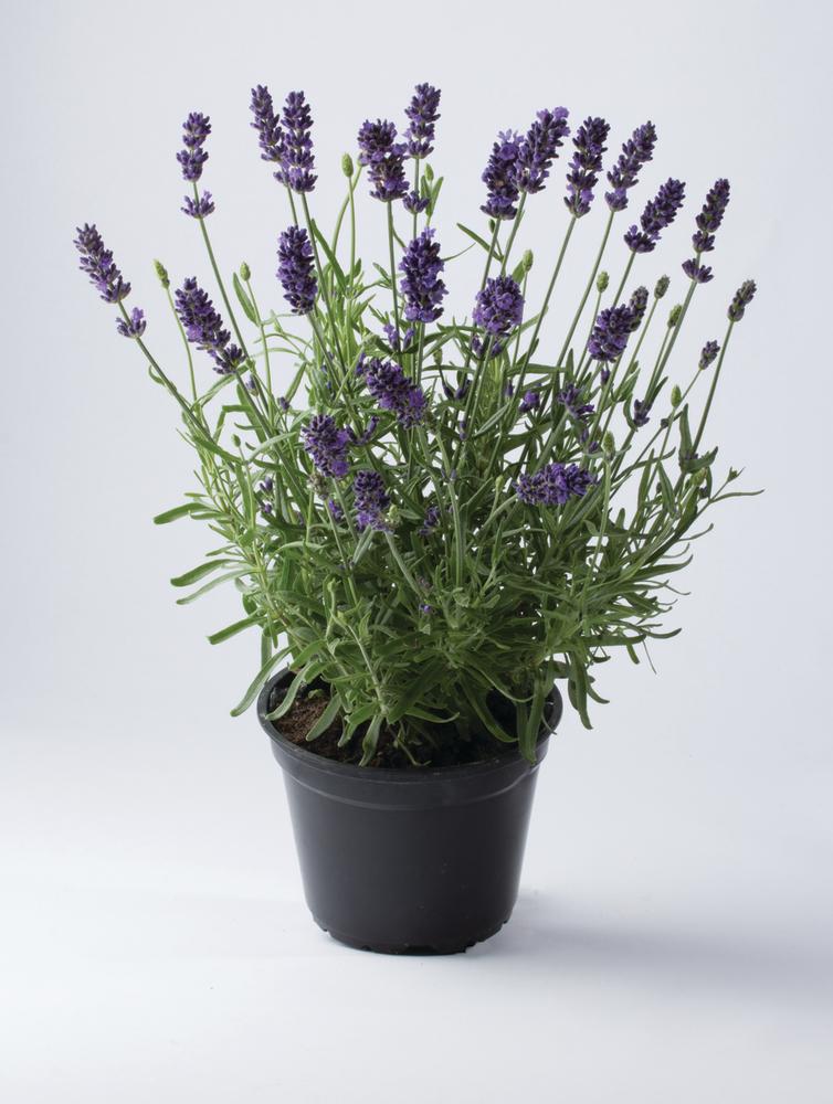 Image Result For Order Flowers Online