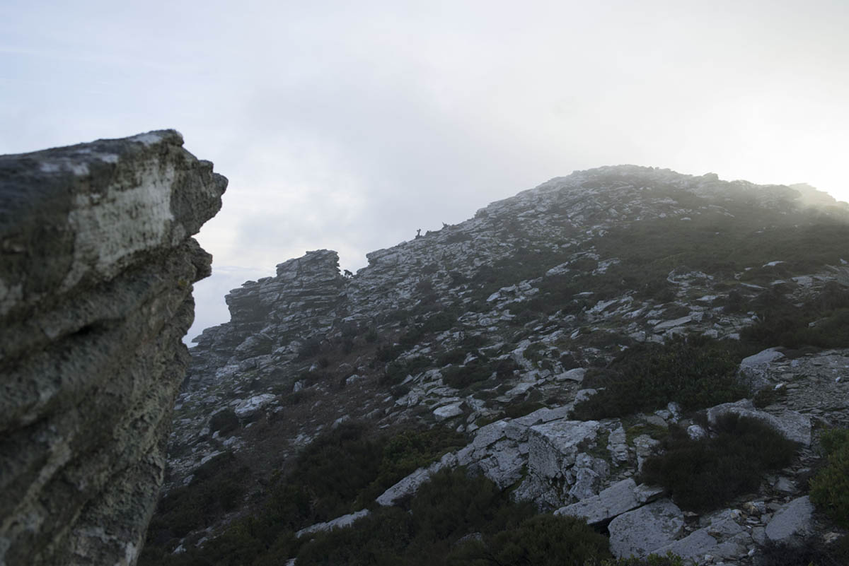 Ikaria-medland-project