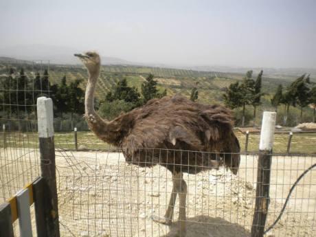 Ostrichzoopark