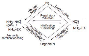 Geological Applications of the Stable Isotopes of Nitrogen